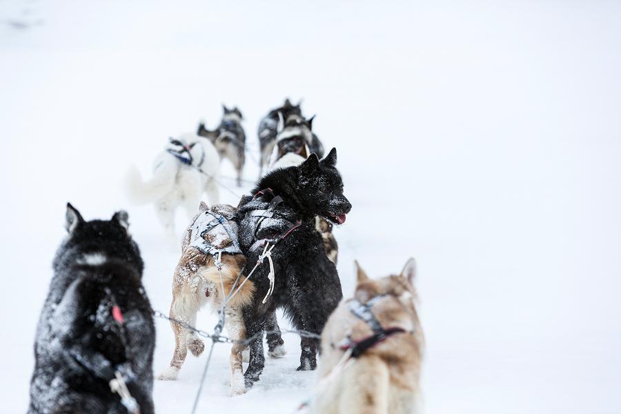 Svalbard 08