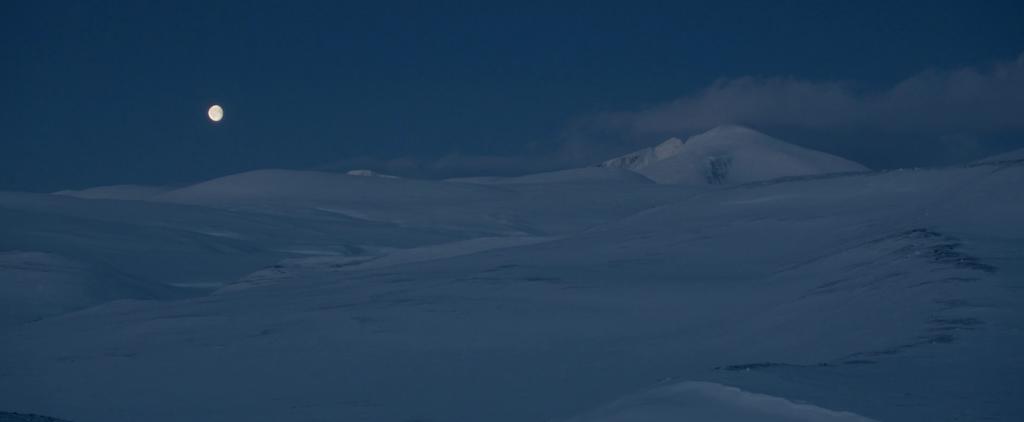 Arctic Muskox Rolf Steinmann 3