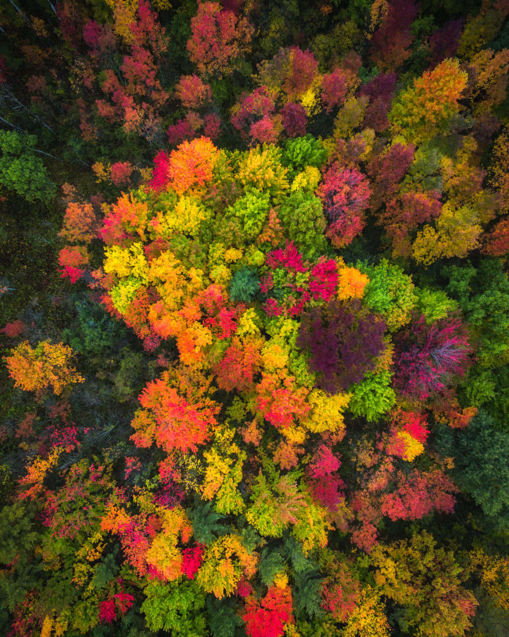 new-york-fall-colors-by-drone-by-michael-matti